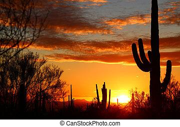 South Western Sunset - Sonora Desert Sunset Near Tucson ...