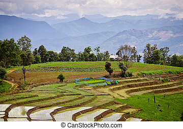 Southeast Asian rice field terraces in Thailand.