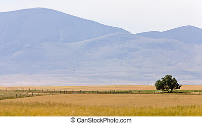 Southern Alberta Rural Scene Prairie near Montana Milk River