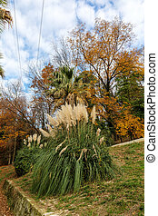 southern autumn park