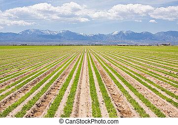 Southern California Farm - A farm in southern California...
