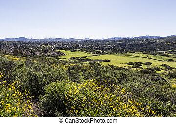 Southern California Suburban Spring