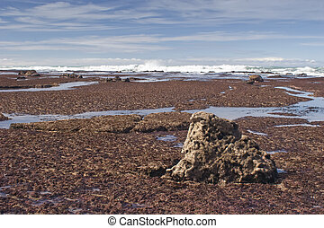 Southern Hawkes Bay Coast 03