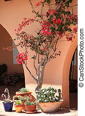 Details of a southern home with red bougainvilleas