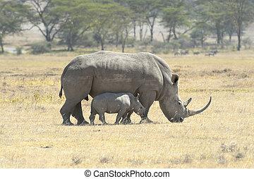 Southern White Rhino with calf
