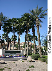 Southwestern style dwellings with palm tree centered...