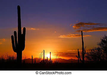Saguaro silhouetted by a desert sunset near Tucson AZ
