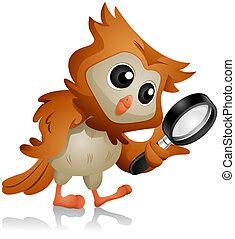 sova, hledání