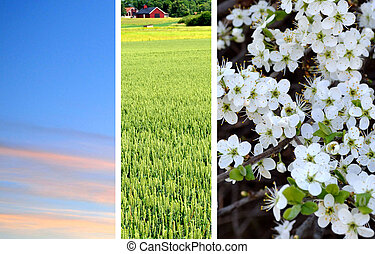 sowing season
