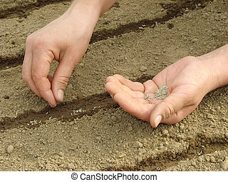 sowing seeds - woman hands sowing seeds...