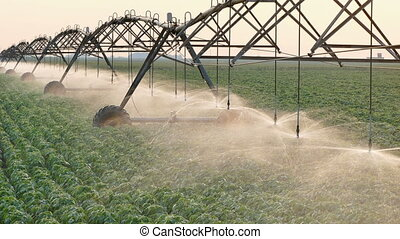 Soy bean field watering - Soy bean field with Irrigation...