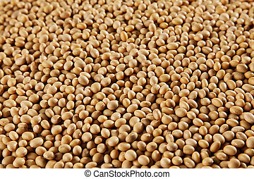stock images of the soya bean