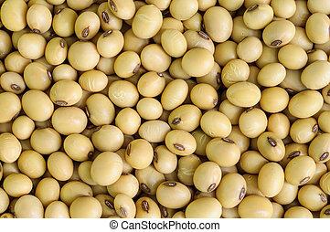 soy, bean.