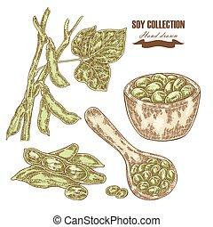 soy, getrokken, hand, soybean, plant