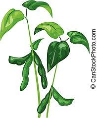 Soya plant icon, cartoon style