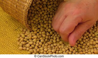 Soybean beans by hand,seeds food raw material,delicious...