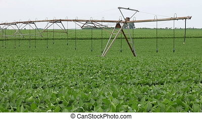 soybean field agriculture