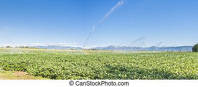 Soybean field irrigated