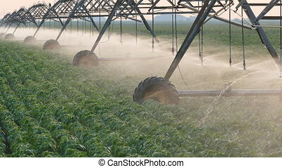 Soybean field with Irrigation system in sunset - Soy bean...
