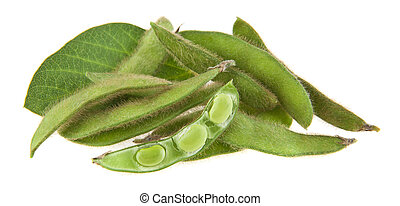 soybean isolated on white background close-up