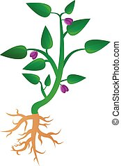 Soybean plant icon, cartoon style