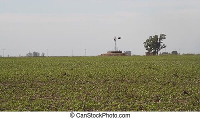 Soybean plantation in the Argentine countryside