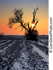 sozinha, campo, árvore, Inverno