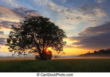 sozinha, campo, dramático, árvore, pôr do sol