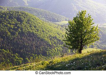 sozinha, montanha, árvore