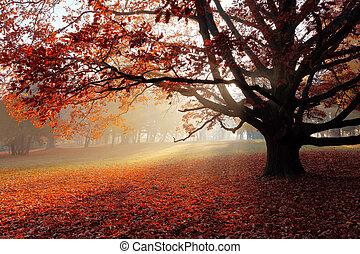 sozinha, outono, árvore, parque