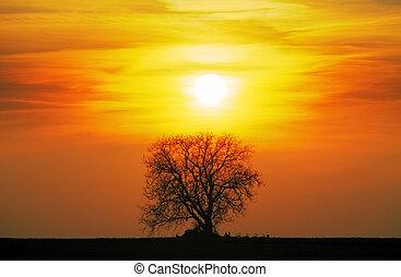 sozinha, sol, árvore, prado, pôr do sol