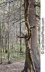 spécial, forêts, écureuil, nourrisseur