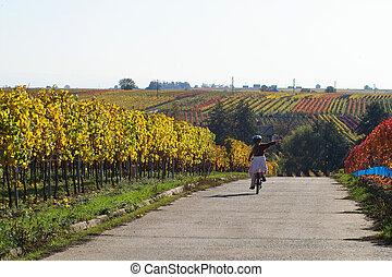 spaß, wineyards