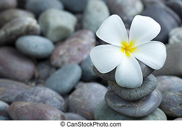 Spa and wellness - Close up white frangipani and therapy...
