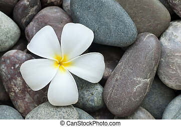 Spa and wellness - White frangipani and therapy stones.