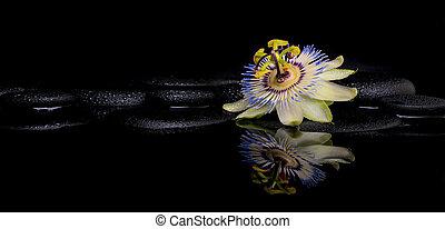 spa, armando, de, passiflora, flor, ligado, zen, pedras, com, reflexão, i