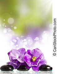 spa bánásmód, masszázs, csiszol, és, rózsaszínű virág
