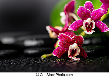 spa background of black zen stones, red orchid