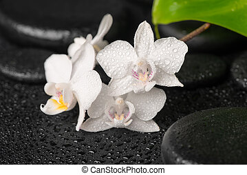 spa background of zen massaging stones, white orchid