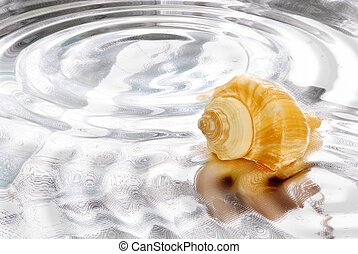 spa background - sea shell in a water background