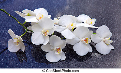 Spa background with white orchid.