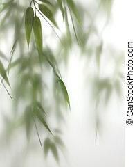 spa, bambou, brume