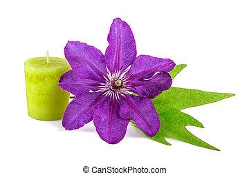 spa, bloem, met, groene, kaarsje