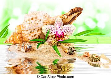 spa, concept, à, seashell