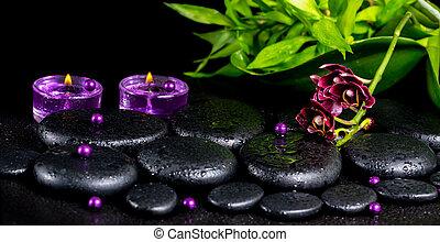 spa, concept, de, fleur, orchidée, phalaenopsis, zen, basalte, pierres, wi