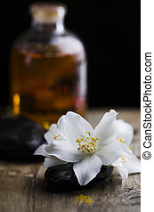 Jasmin flower and scented oil - Spa concept. Jasmin flower...