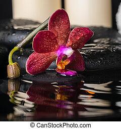 spa concept of deep purple orchid (phalaenopsis), zen stones wit