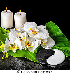 spa concept of orchid flower, phalaenopsis, leaf with dew, candles and Yin-Yang stone texture is isolated on black background, close up