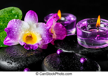 spa concept of orchid flower, zen basalt stones with drops,...
