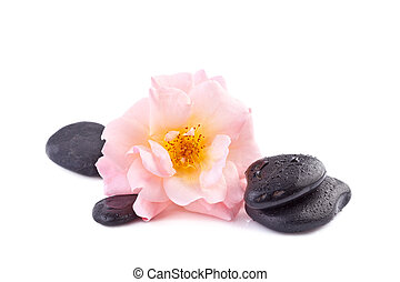 spa concept, pink rose with zen stone